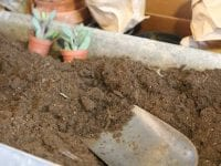 Hoya Planteplanet Workshop